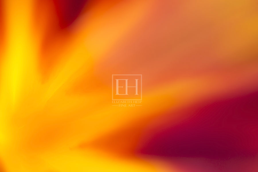 Floral abstracts fine art photography as interior art by Canadian visual artist Elizabeth Hesp