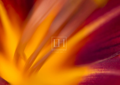 Fire-Lily-Revival-1-FlA
