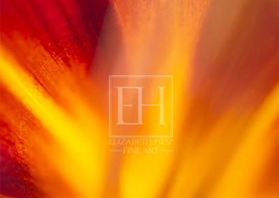 Fire-Lily-Revival-2-FlA