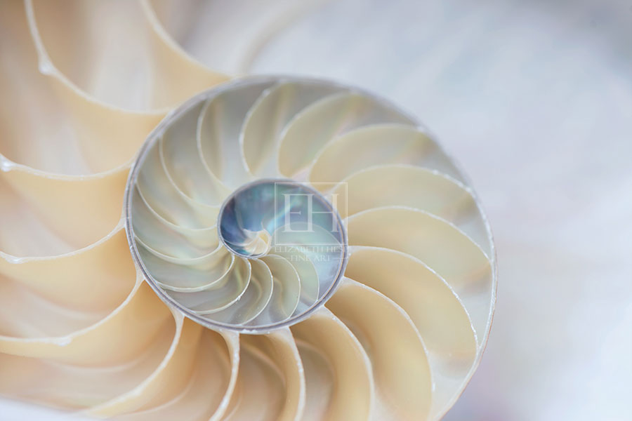 Nautilus Rhythms fine art photography open edition images from Elizabeth Hesp Fine Art by Canadian Visual artist Elizabeth Hesp.